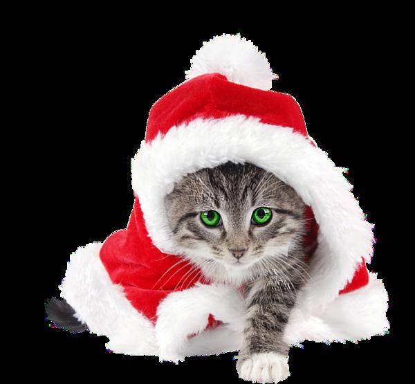 chat noel Chat Noël